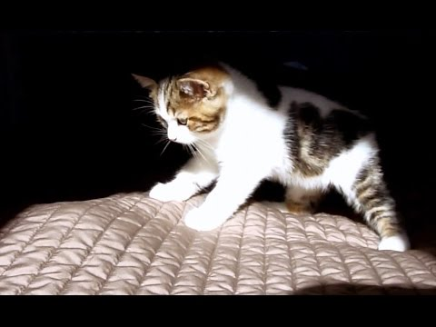 What's under the covers?   Funny kittens video