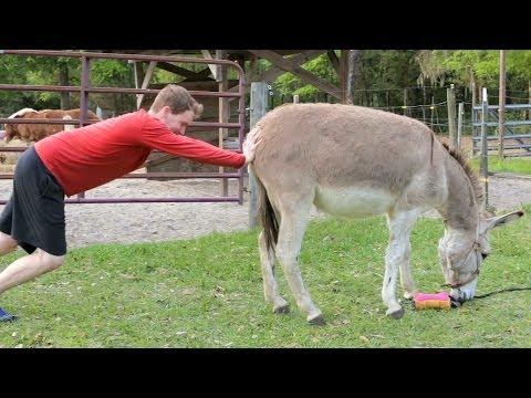 My Donkey Won