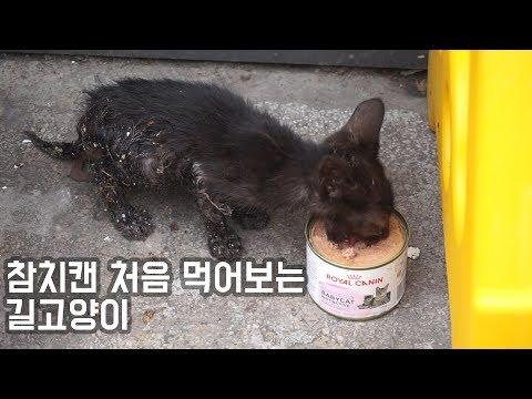 [도깨비] 참치캔 처음 먹어보는 길고양이