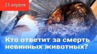 Кто ответит за смерть невинных животных?