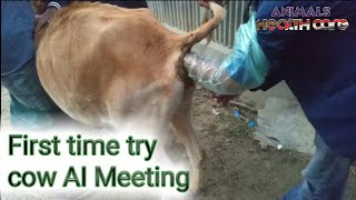 First time try cow AI Meeting. Animals Health Care
