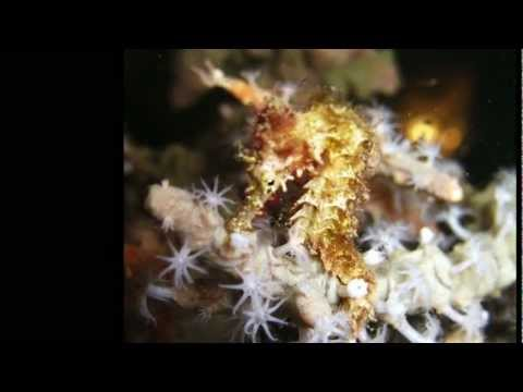 OPCFHK USSP 2012 Conservation of coral and seahorse in Bohol, Philippines (CUHK)
