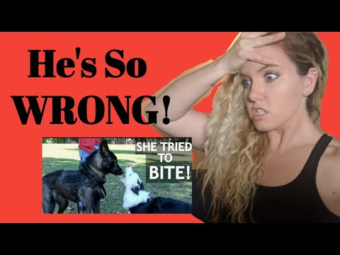 Dog Trainer Reacts: ZAK GEORGE TAKES HIS DOG TO THE DOG PARK  THIS IS WHY PEOPLE HATE POS REINF!