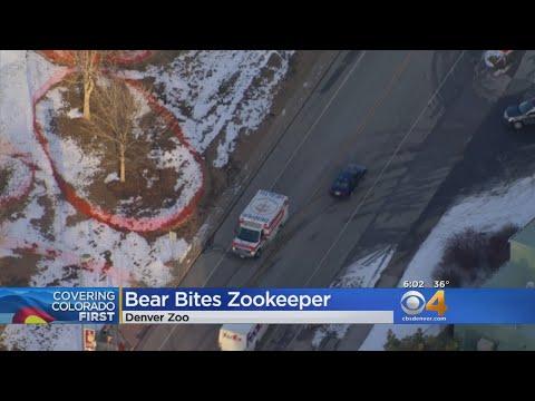 Dr. Taco - Bear Bites Denver Zookeeper
