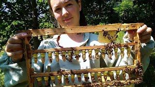 Вывод маток.простой способ для начинающих пчеловодов.Подготовочный процесс от Воска до мисочок