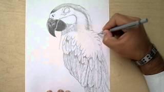 como dibujar un perico-how to draw a bird
