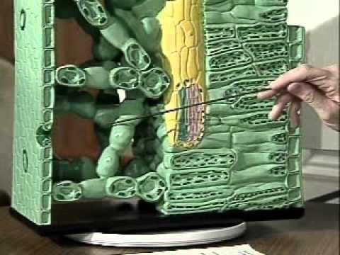 Master Gardener Series-Plant Physiology (1997) - Part 1 of 2