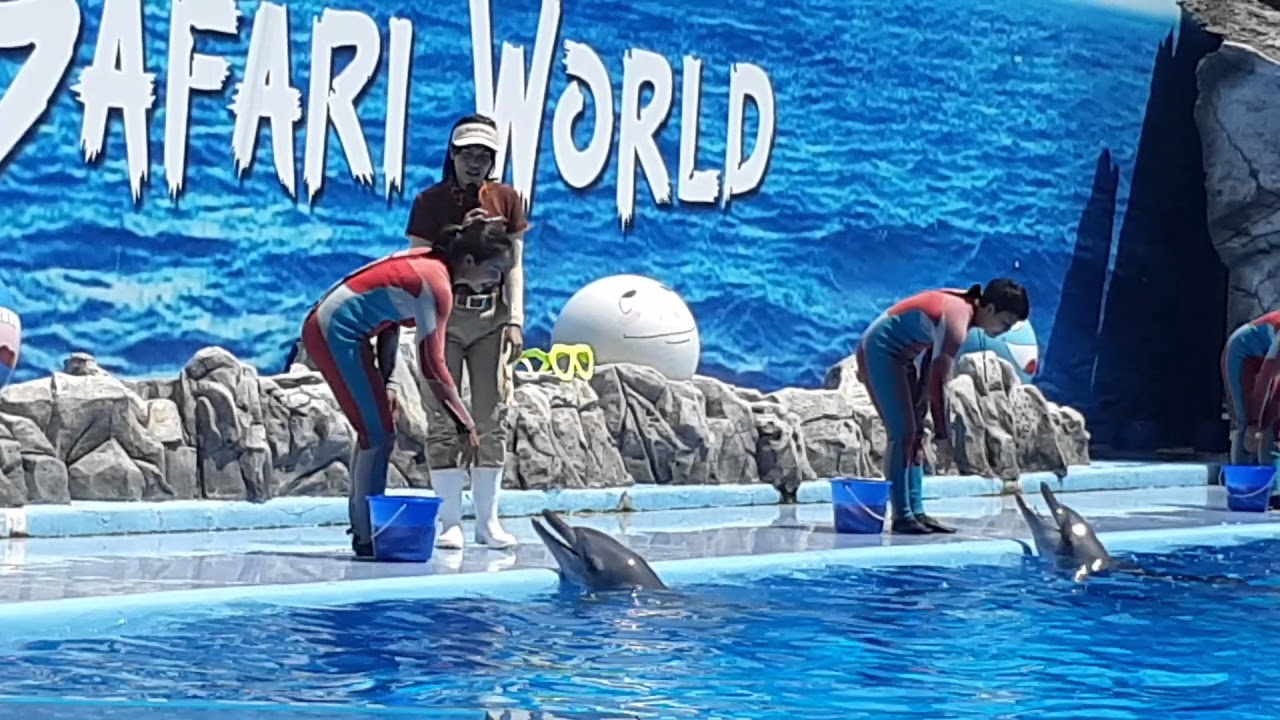 Safari World - Dolphin Show - Thái Lan 10/04/2018