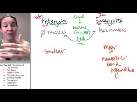 Cell Types ☆ Biology Course