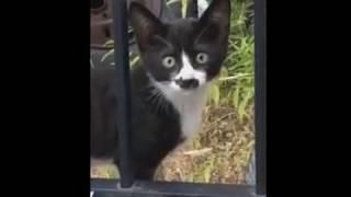 Котенок с очертаниями другого кота на морде
