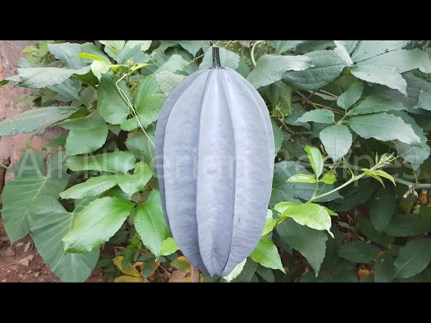 15 Facts About Nigerian Pumpkin Leaf (Ugu) | All Nigerian Recipes