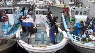 2010.10.13.苫小牧釣舟協同組合主催 カレイ釣り大会 勝洋丸サイト