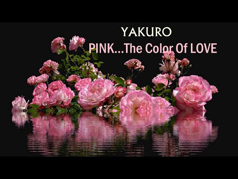 PINK... The Color Of LOVE - YAKURO