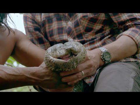 Catching a giant anaconda  Tribes, Predators & Me: Episode 1 P  BBC Two