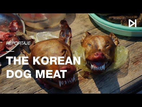 Dog Meat | Myth or Reality? | Documentary