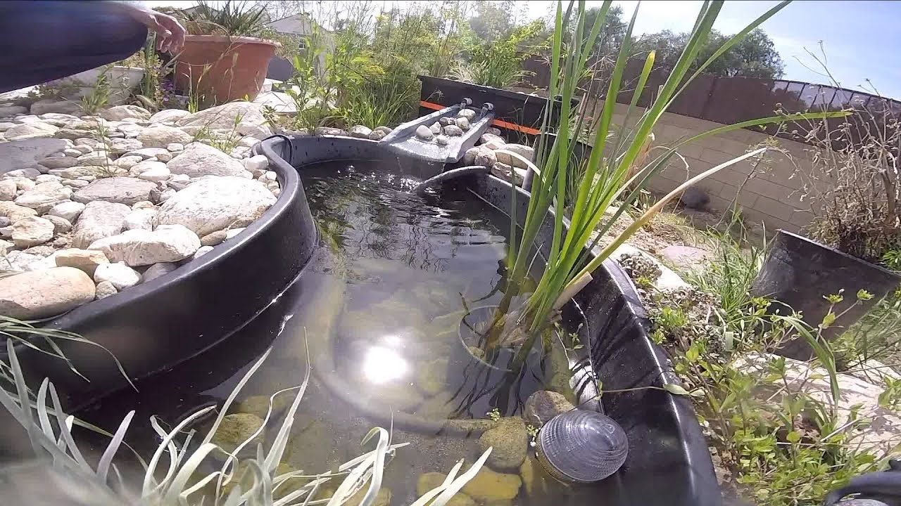 Fancy Goldfish Pond With Bog Filter During Early Spring