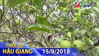 Video Nhà vườn điêu đứng vì cam rớt giá   THỜI SỰ HẬU GIANG - 15/9/2018 download MP3, 3GP, MP4, WEBM, AVI, FLV September 2018