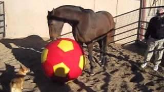 Mine That Bird's new ball