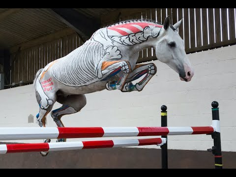 Anatomical Gymnastic Jumping - Horses Inside Out
