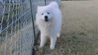 撮影日2013年4月4日 アライ畜犬牧場 http://www.araichikuken.com.