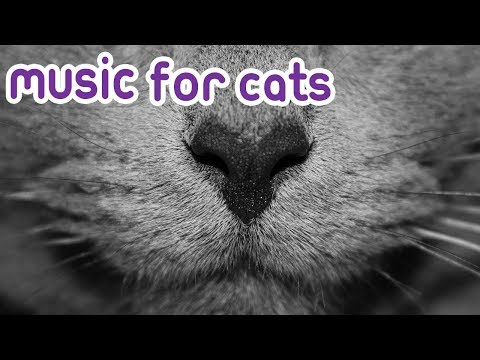 Cat Music: 15 hours of relaxing sleep music for your cat!