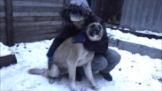 Платон / Собака из Приюта ДОГПОРТ