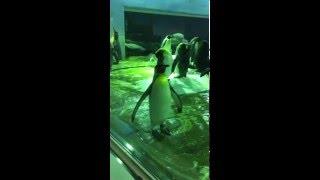 変なペンギン見つけました。