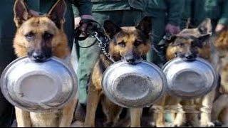 Los mejores perros entrenados y disciplinados que nunca imaginaste que existen