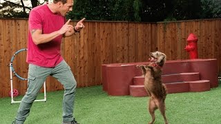 Train Your Dog in 7 Days with Lucky Dog Lessons by Brandon McMillan