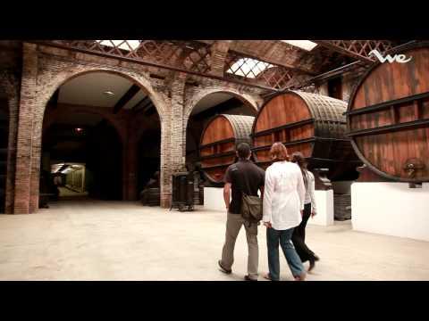 Wine tour near Barcelona. Visit Codorniu Cellars Private | We Barcelona Experiences