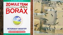 Use Borax And Say Goodbye To Fleas, Roaches, Ants And Unwanted Pests!