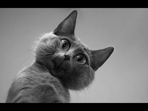 Смешные коты (60 фото) -