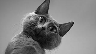 Смешные коты и кошки. Самые смешные видео про кошек и котят!