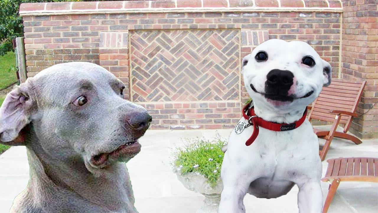 Dogs making funny faces funny and cute dog compilation youtube dogs making funny faces funny and cute dog compilation voltagebd Image collections