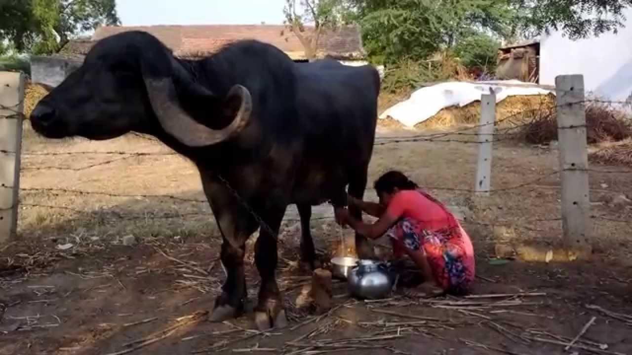 cock milk hand job