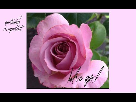 Rose Blue Girl | Nirp | gartenfein [HD]