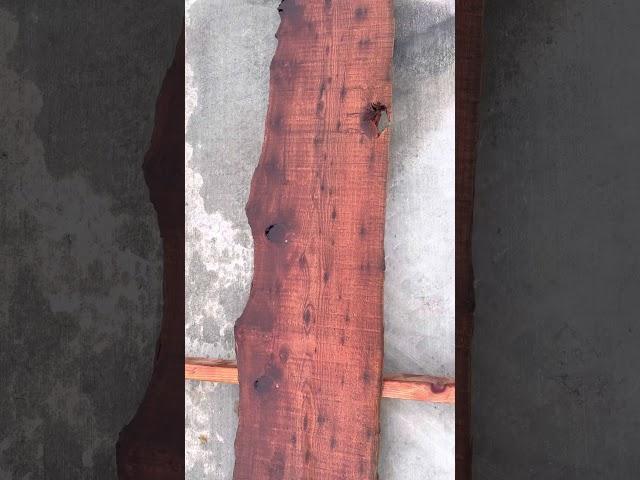 Old Growth Redwood Slab #21