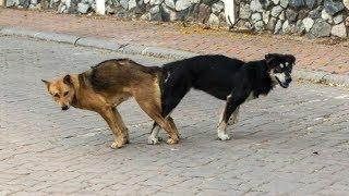 25 Datos Inútiles #10 | ¿Porque los perros se quedan pegados?