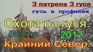 ОХОТА НА ГУСЯ. Весна 2017. ч.4