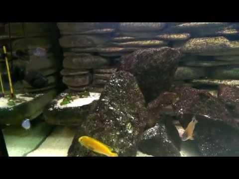 Malawi Fish Tank Aquarium 3D Background 575l