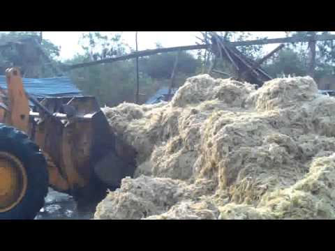 Cattle farming in semi-arid location -- dry season cattle feeding