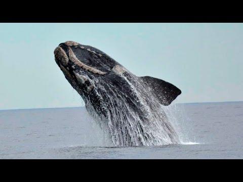 Ballenas: Patagonia Argentina