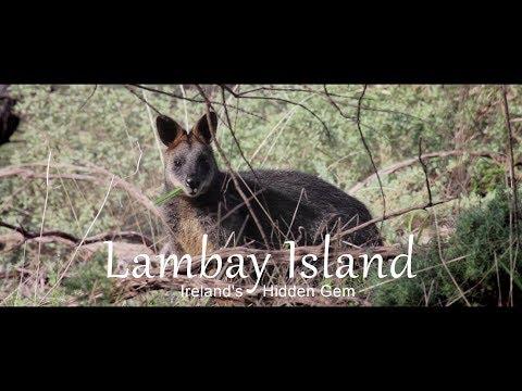 Lambay Island - Irelands Hidden Gem and Wallabies