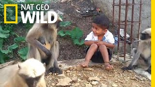 Boy and Wild Monkeys Make Unlikely Friends   Nat Geo Wild