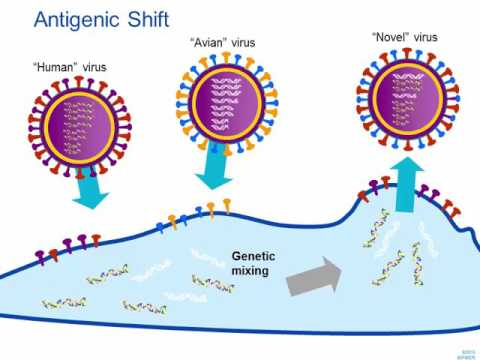 Influenza: An Update on the Disease and Laboratory Diagnosis [Hot Topic]