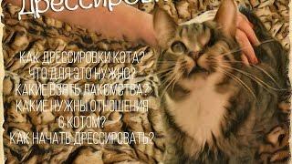 Как научить своего кота команде Лежать? - Дрессировка кота - Дремсируем кота