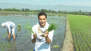 Foreigners Planting Rice In The Philippines (Ep. 7)