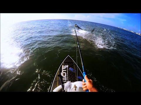 Tarp On! - Tarpon Fishing - Bote Boards