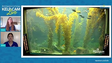 Live Kelp Cam: BINGO | June 16, 2020 10 am