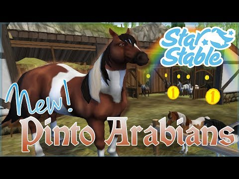New Pinto Arabian Horses & Star-Struck by Spots!! • Star Stable Online - Episode #153